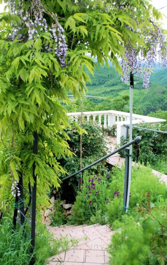 Wisteria arch and belvedere